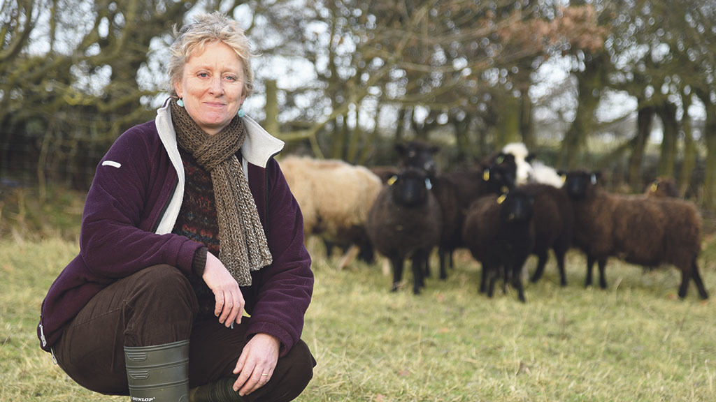 Shetland fleeces triumph in the showring