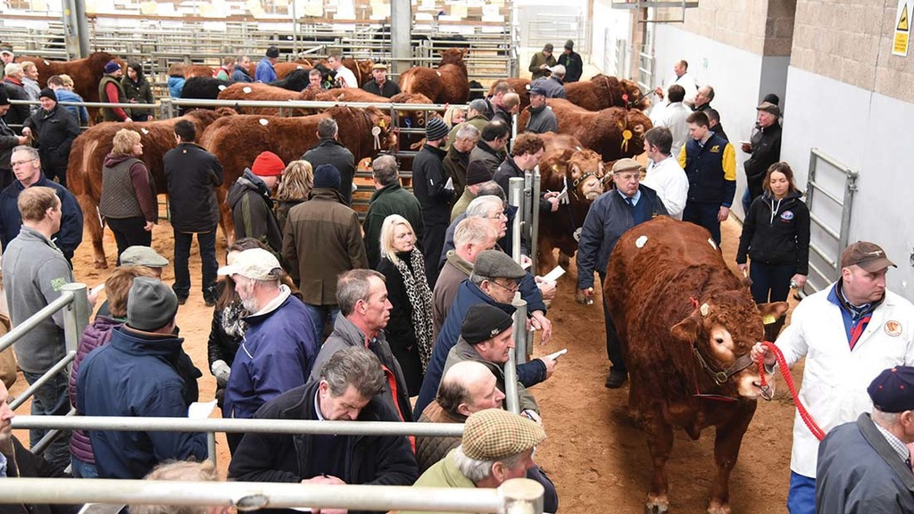 Beef breeding trends changing