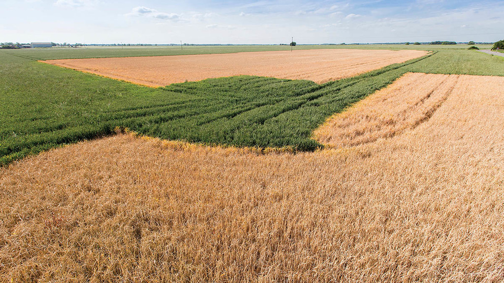 Black-grass-affected crops: Stick or twist?