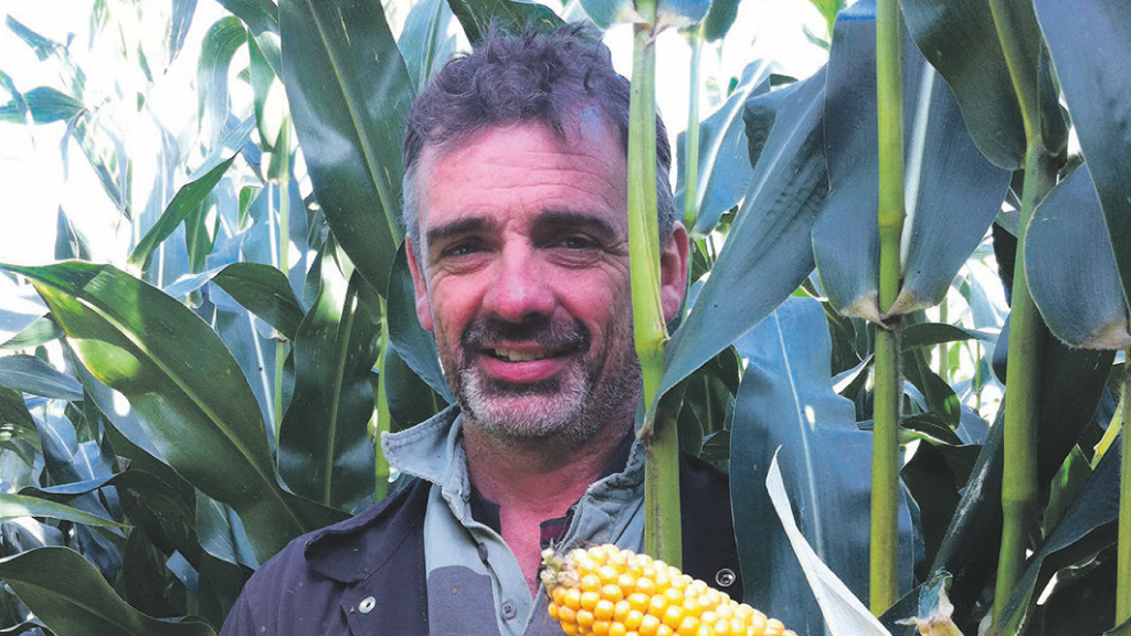 Fresh approach gives boost to maize yields