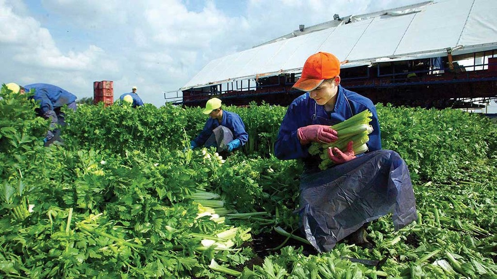 Non-EU workers targeted to plug agricultural labour gap