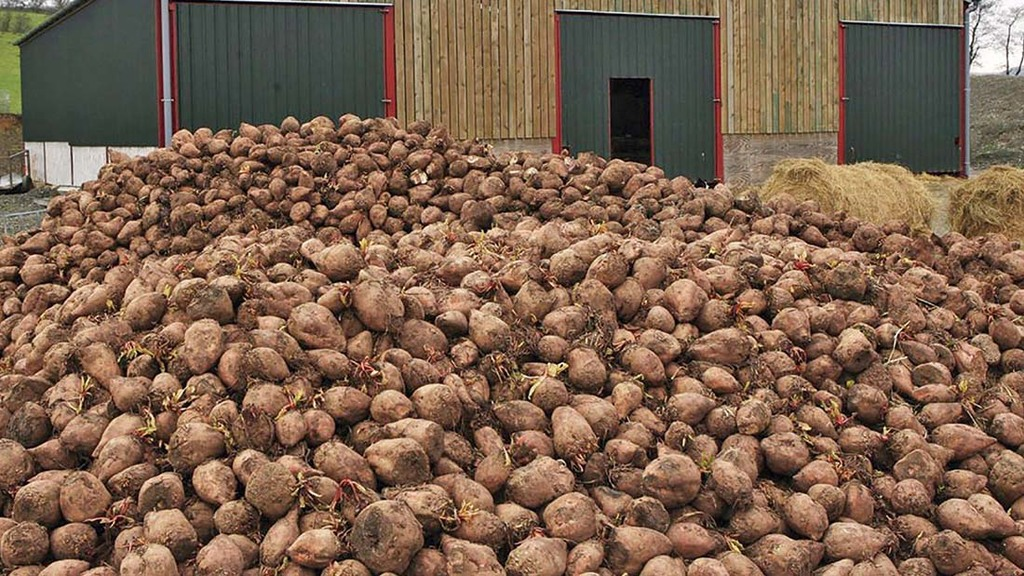 Growers facing uncertainty as dispute causes sugar beet contract delays