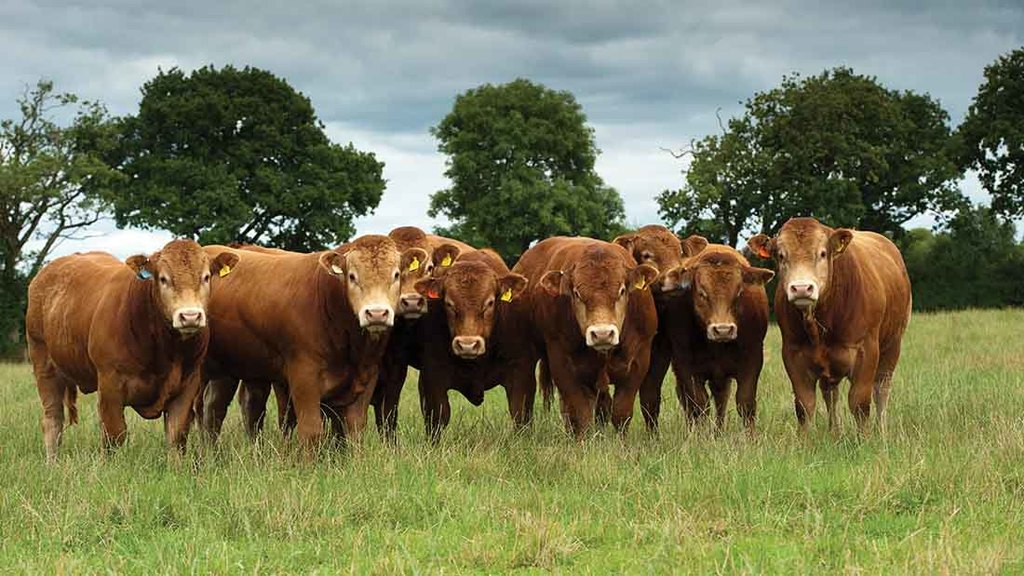 BREXIT: Welfare standards key for Beef sector