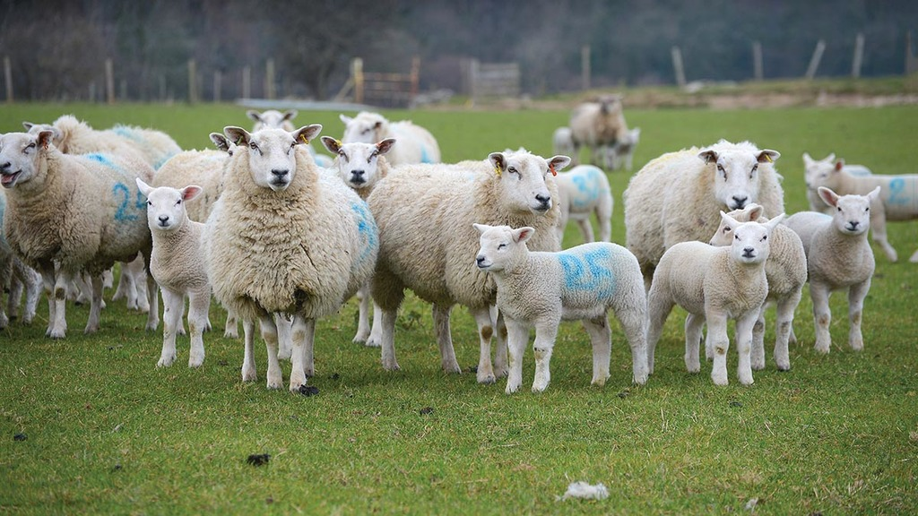 Brexit 'bump in the road' but future bright for Welsh meat exports