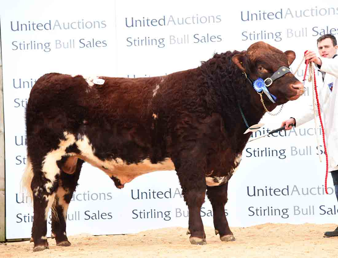New Beef Shorthorn record set at Stirling bulls (Stirling, United Auctions)