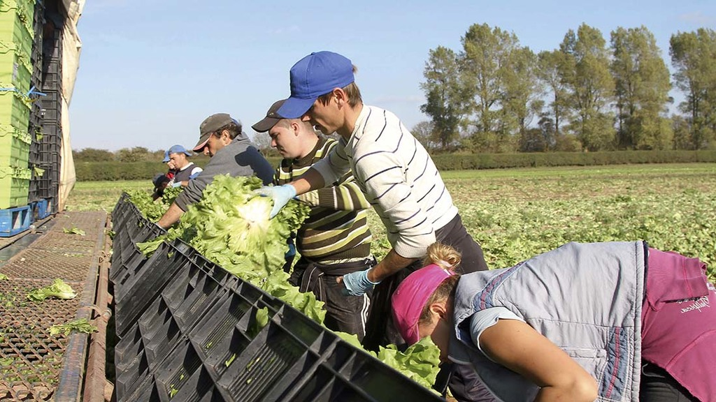 Quarter of Brits want to see fewer immigrants picking fruit and veg