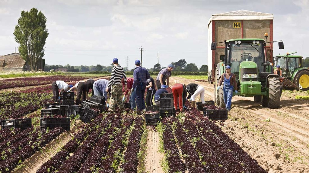 BREXIT: Labour access top priority for UK Horticulture