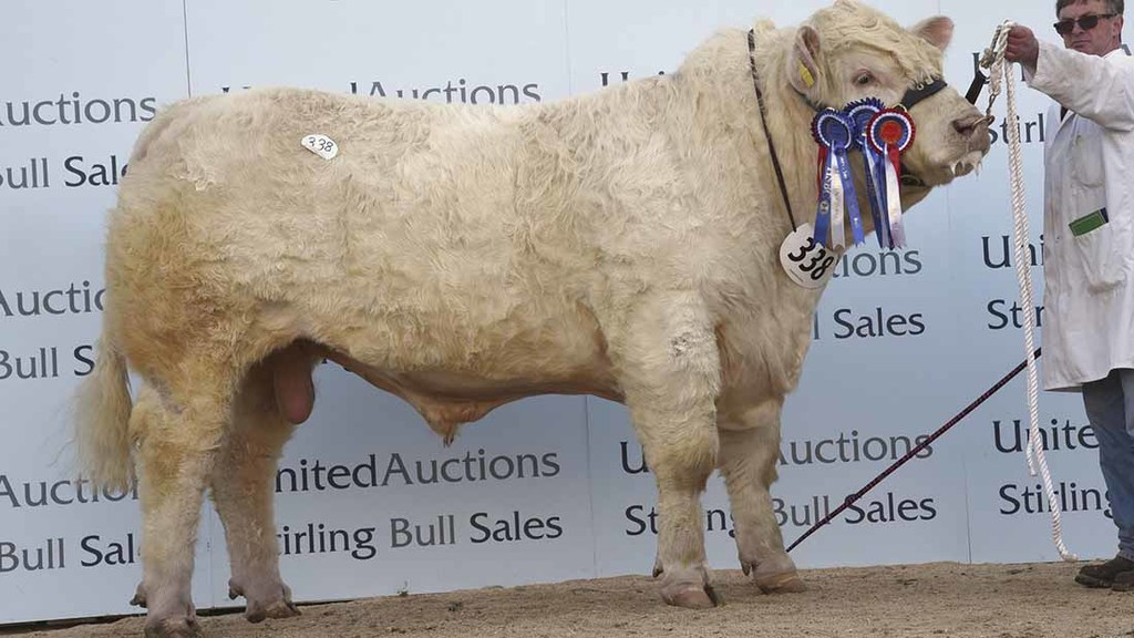 The senior champion and reserve overall takes top billing and sells for 25,000gns.