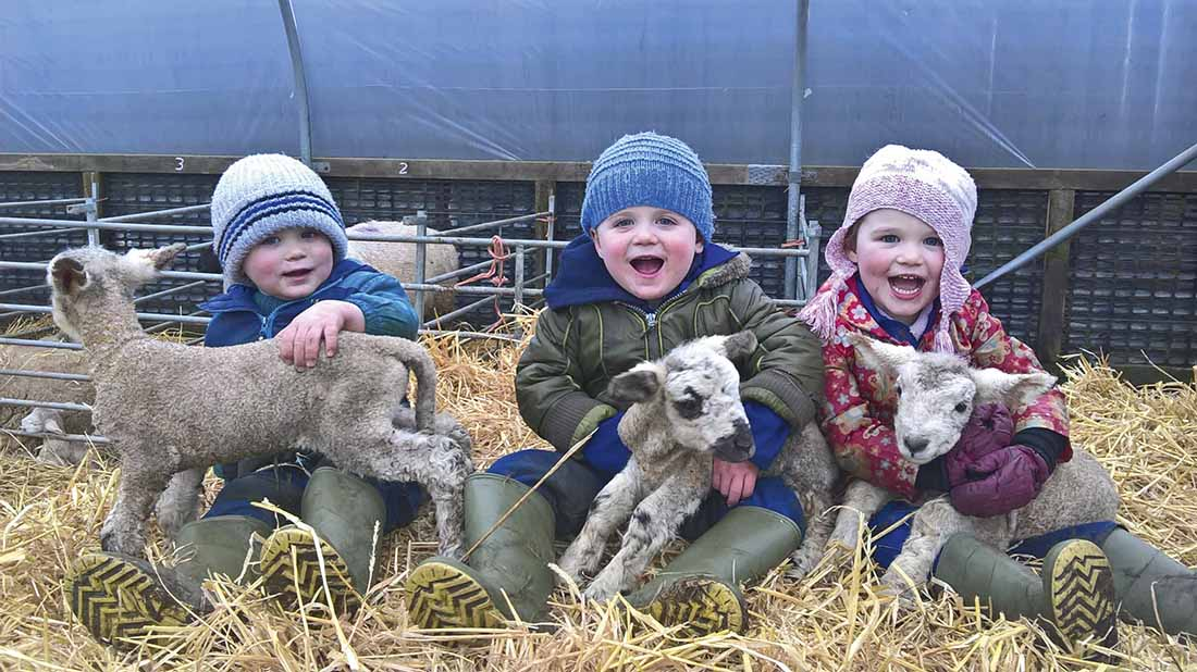 Harry, Harley and Isabella with two-day-old triplet lambs.