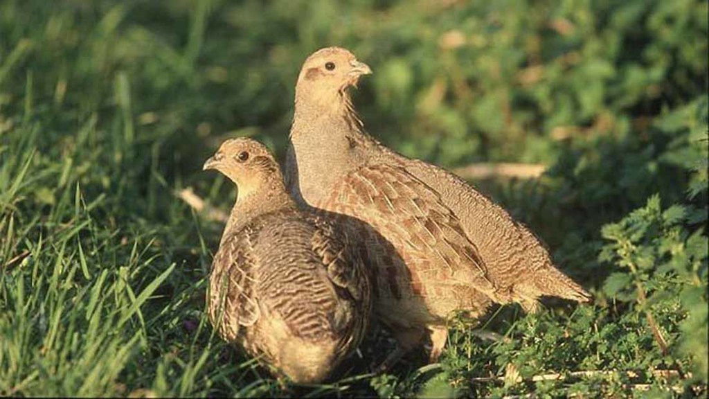 NFU hits back at claims neonics are poisoning farmland birds