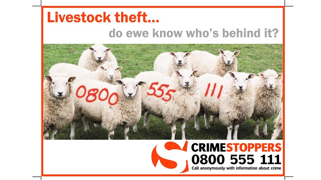 Police launch livestock intelligence campaign to take rural crime seriously