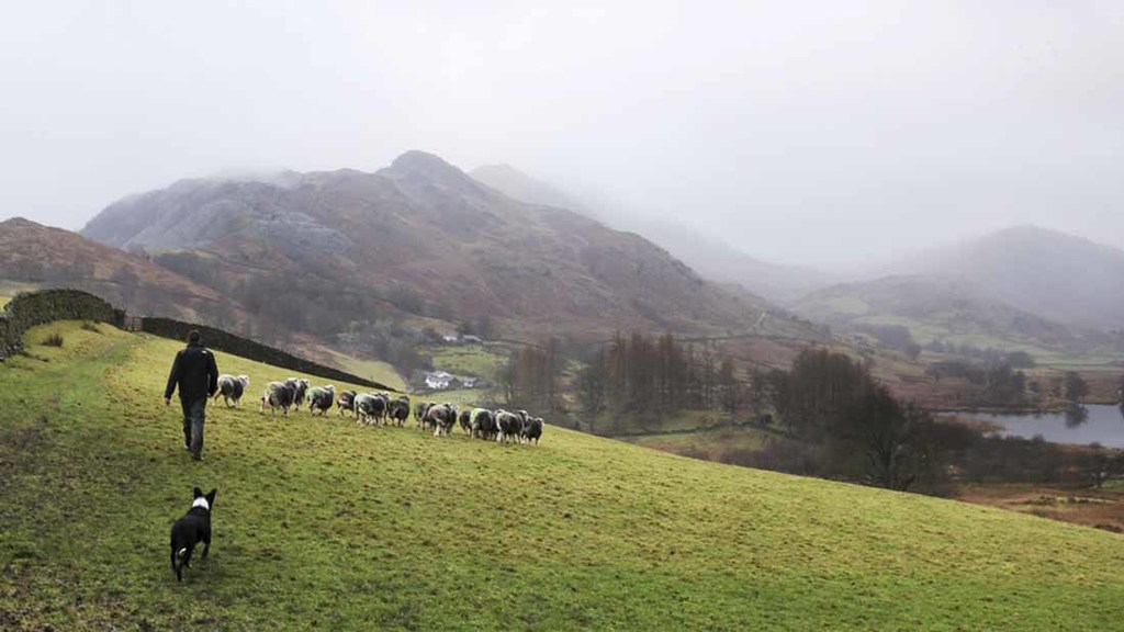 Lake District calls on farmers to help shape the future