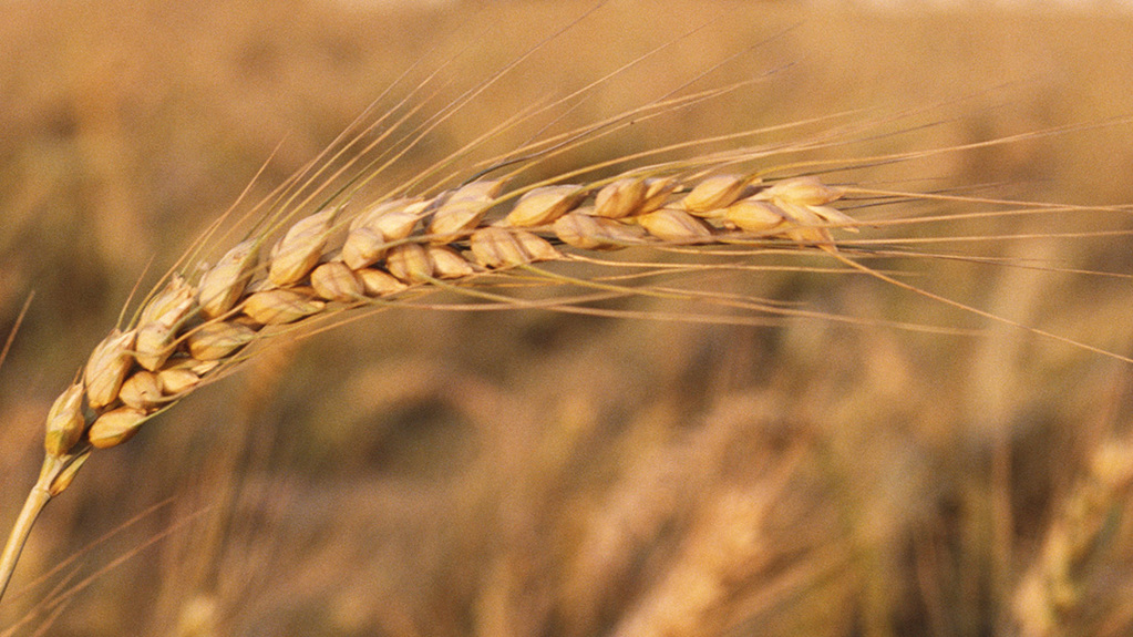 General Election 17: Short term positive, long term 'bleak' for grain prices