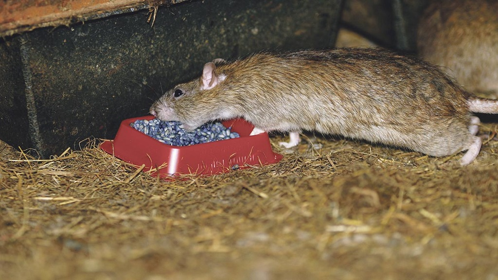 Vermin control: How to prevent rats and mice causing farm headaches