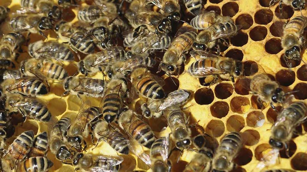 Vote on full neonics ban could be postponed again
