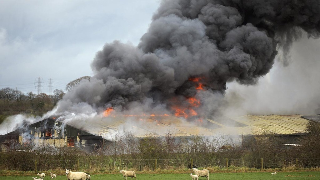 16,000 chickens killed in Carlisle barn fire