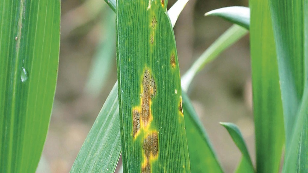 Fungicide Futures answers septoria resistance management questions