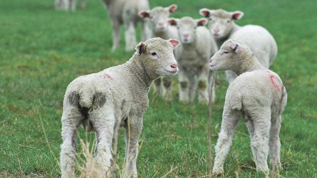 ANIMAL HEALTH: KEEPING LIVESTOCK HEALTHY AND PROFITABLE
