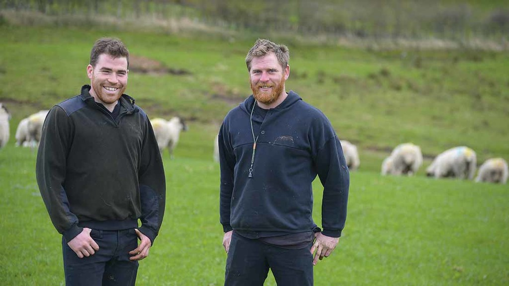 Paddock grazing leading to improved lamb growth rates