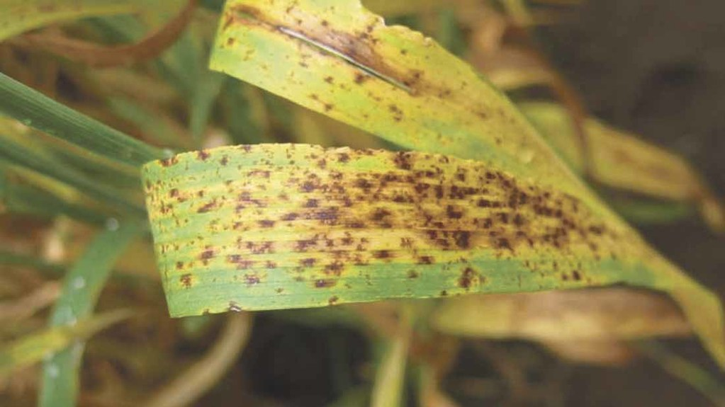 Ramularia resistance to three fungicide groups found in Germany