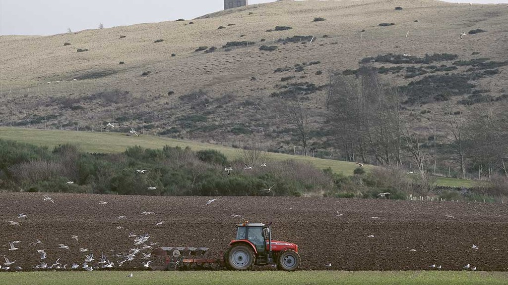 Scottish agricultural tenancy sector sees sharp decline