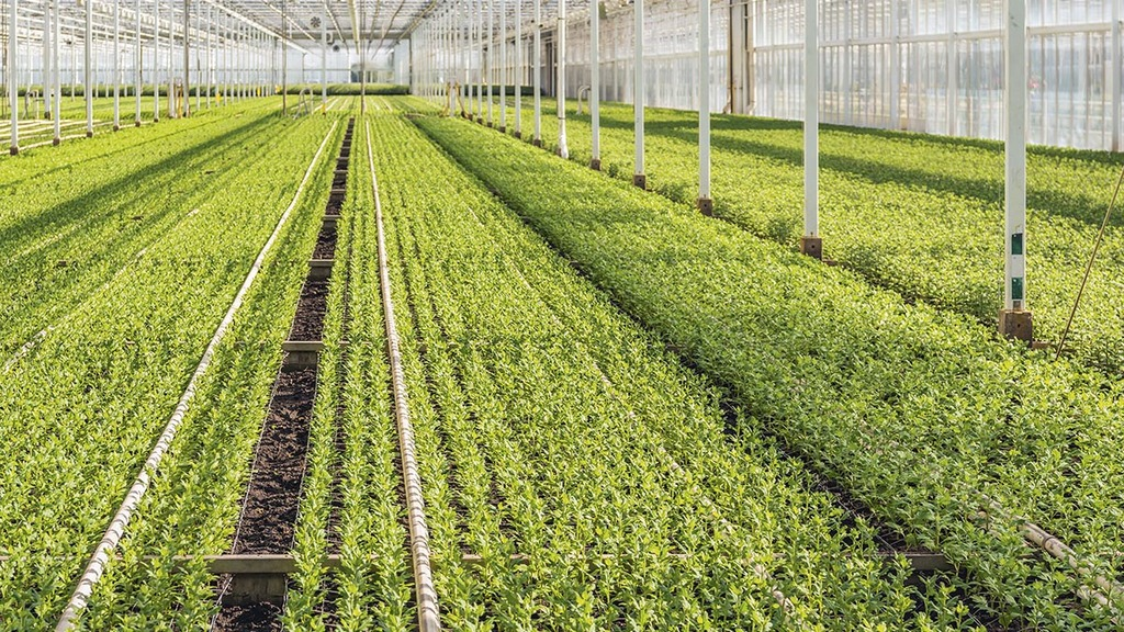 Business rates reprieve for nursery growers