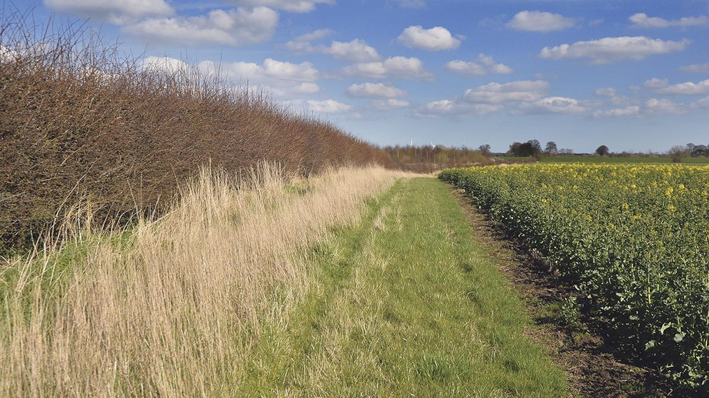 Farmer facing Countryside Stewardship delays considers quitting scheme