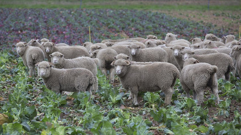 Livestock and vegetables are a good mix for Suffolk farm business