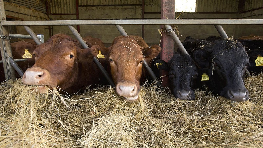 Livestock farmers could face hit as valuable animal feeds used to feed AD