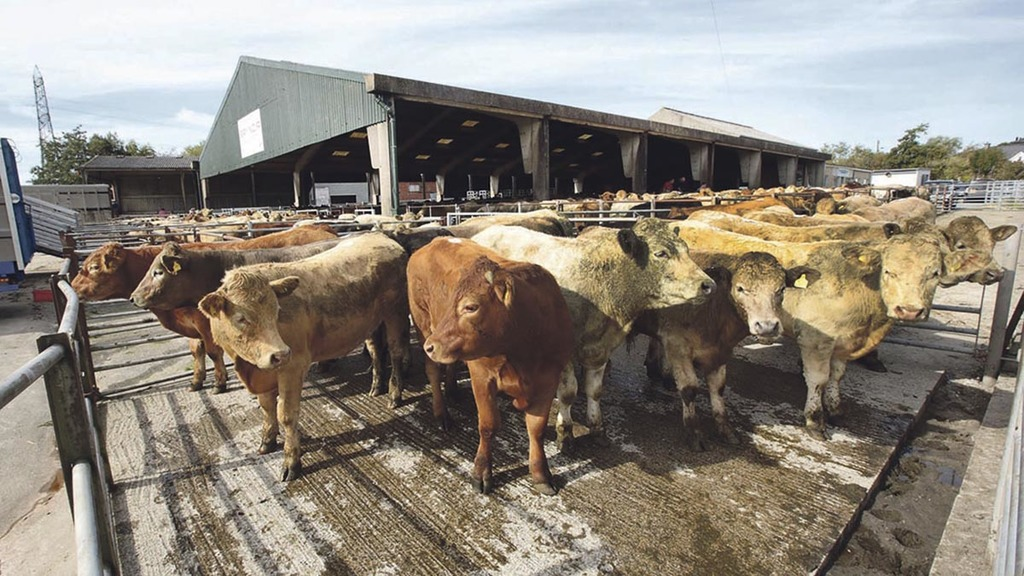 Industry issues IT warning as Wales develops livestock traceability system