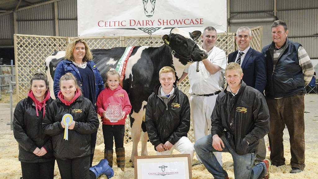 Tregibby herd steals the limelight at Celtic Dairy Showcase