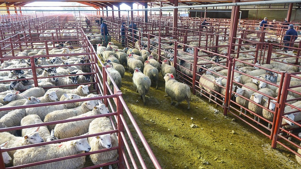 Easter demand boosts UK lamb sales