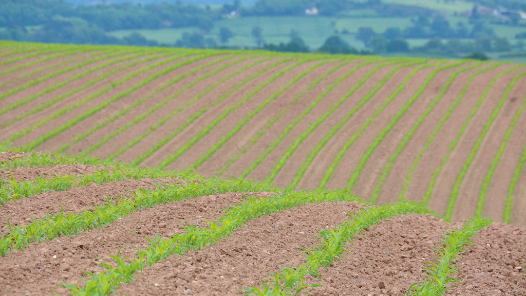 Maize Matters 2017: Fertiliser advice to support growth