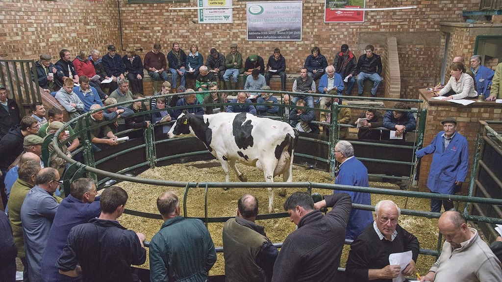 Dairy cattle prices recover after 'awful' March 2015