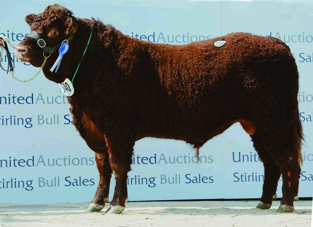Drumaglea Kes sold for 12,000gns.