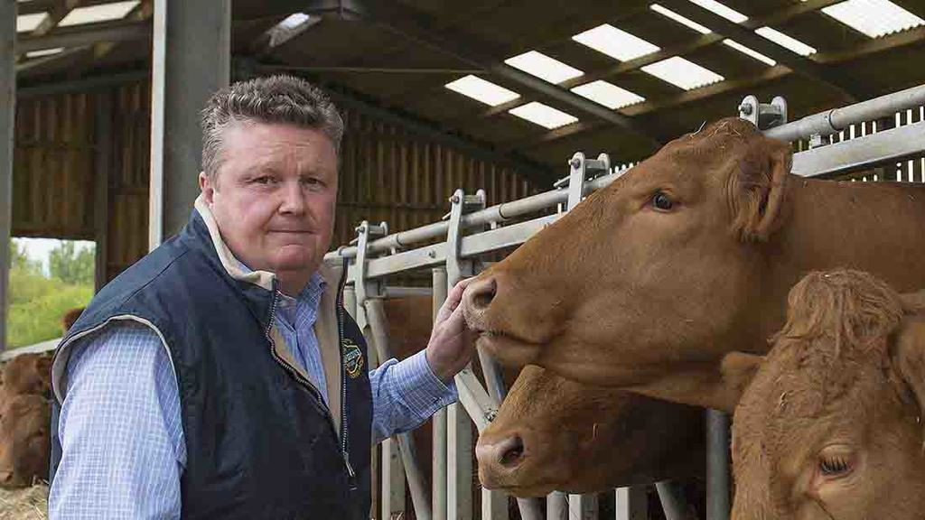 Performance is key focus for South Devon herd