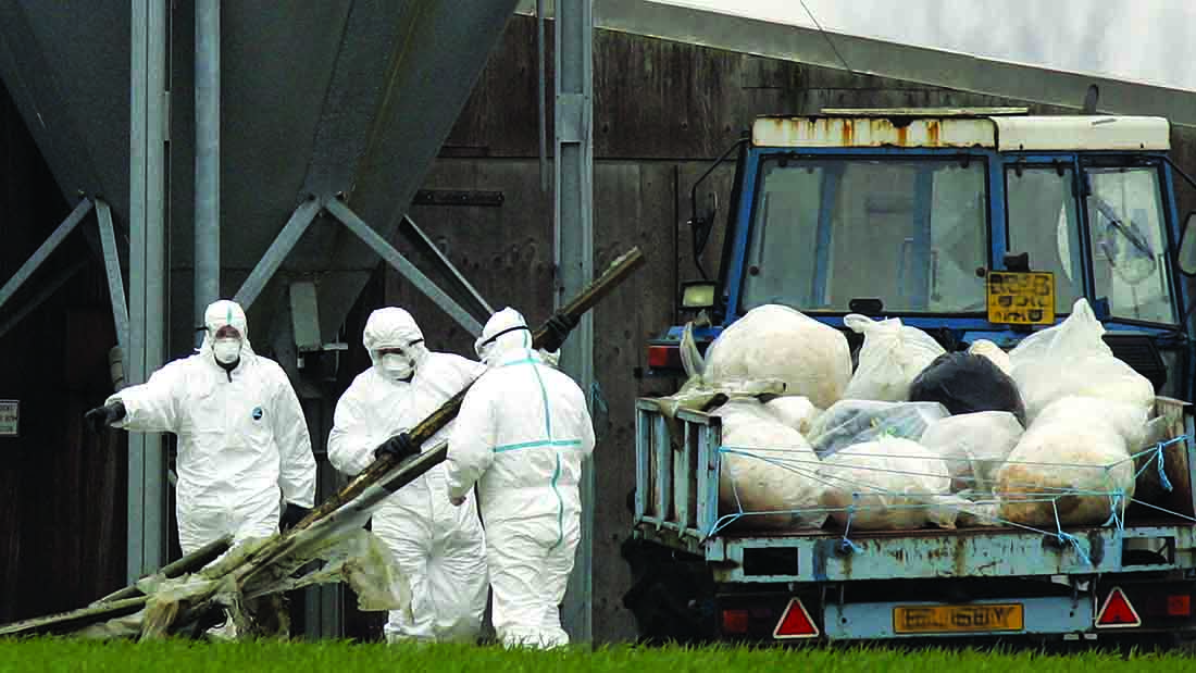 Farmers warned of 'recurring' bird flu threat after outbreak in Sweden