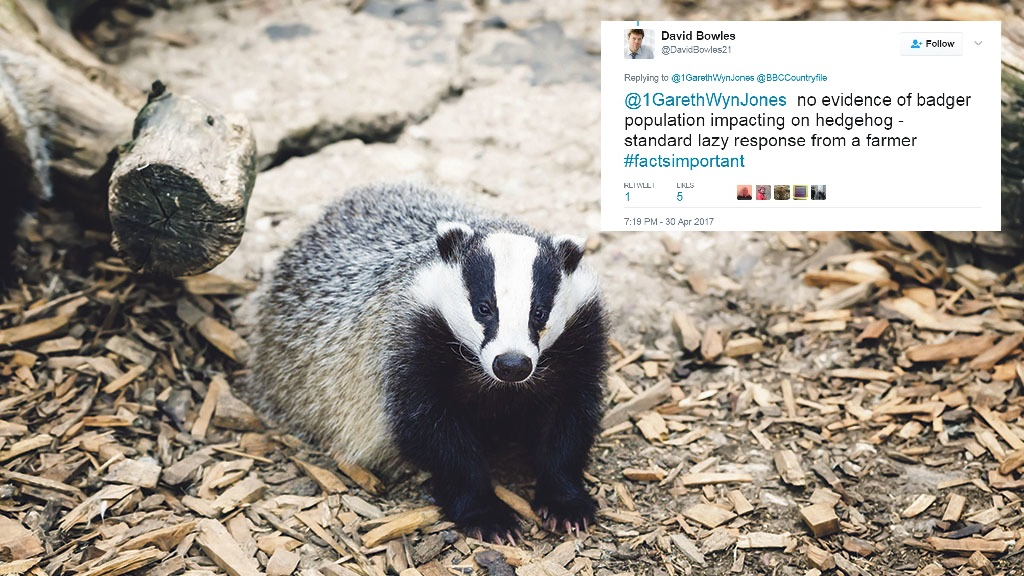 'As PR guru for the RSPCA, I thought he'd have more common sense' – farmer hits back after hedgehog-badger row