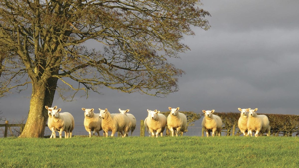 Farmer fined £1,200 after dead sheep left to rot on his land