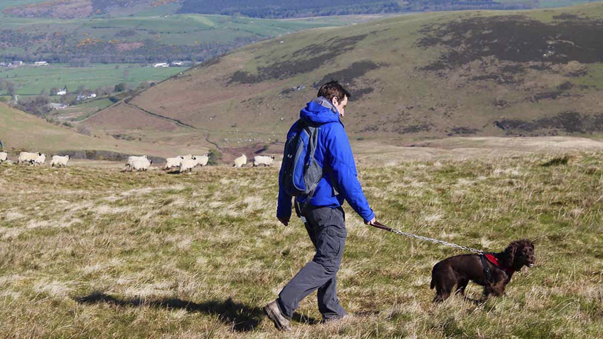 Dog walkers 'still quite blasé' about livestock worrying in the UK countryside
