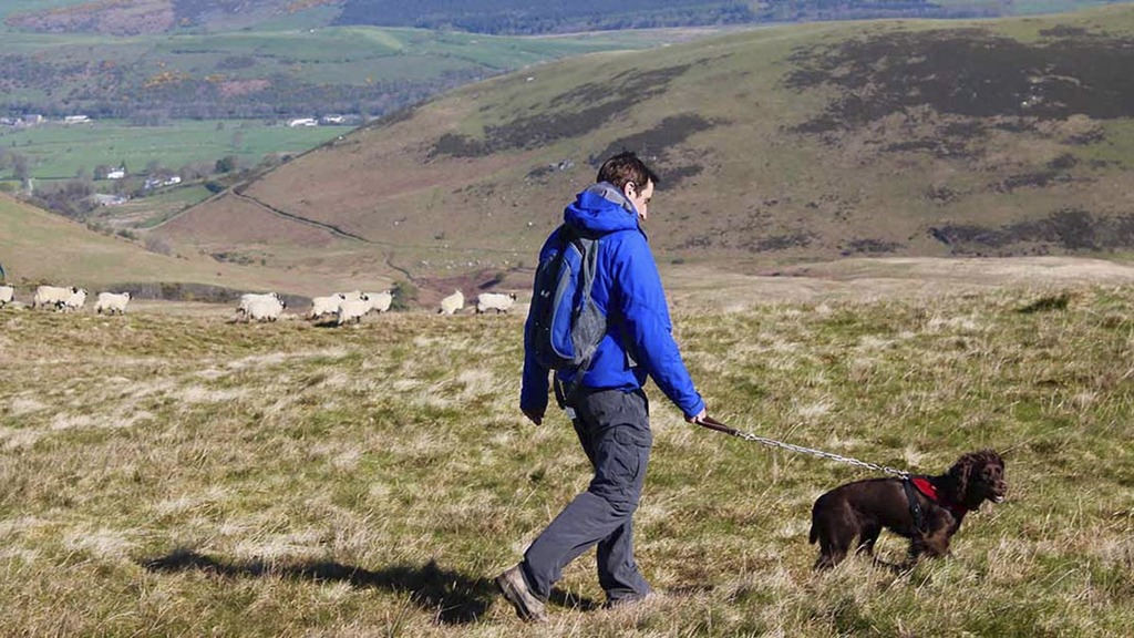 Number of dog attacks on livestock fall for first time since 2012