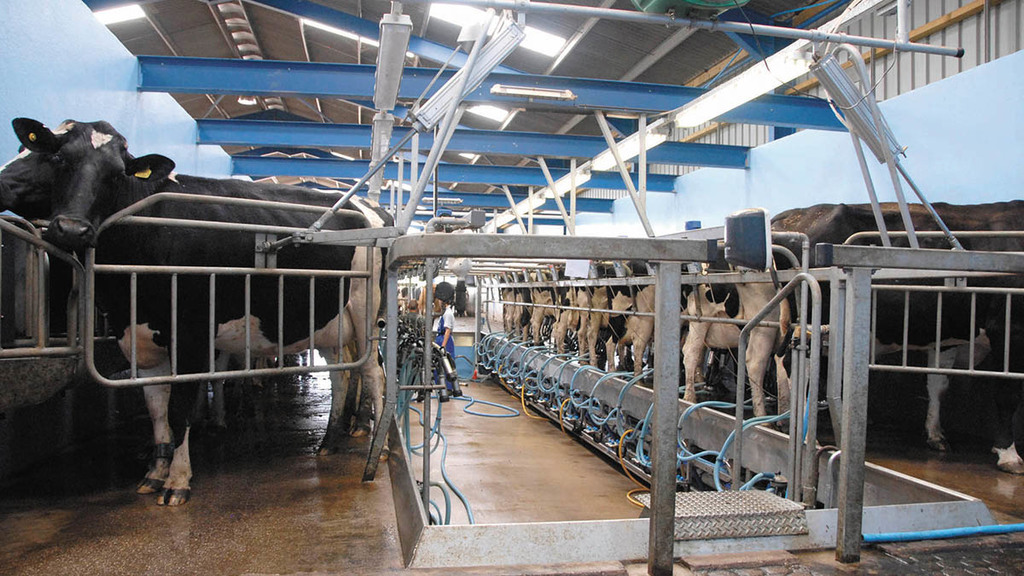 Young people need opportunities to thrive in dairy industry