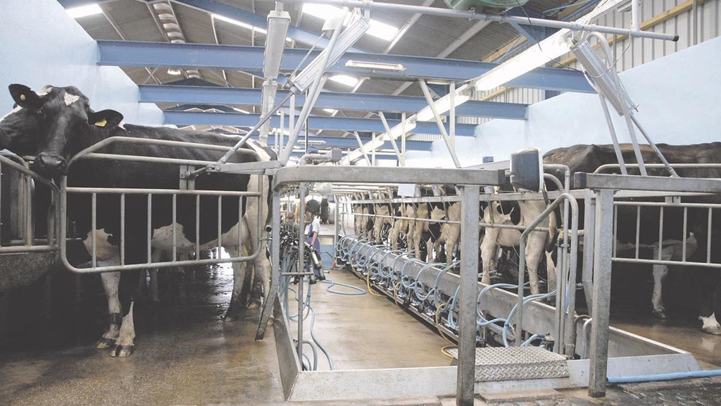 Farm expansion 'not the answer' to surviving volatility in dairy sector
