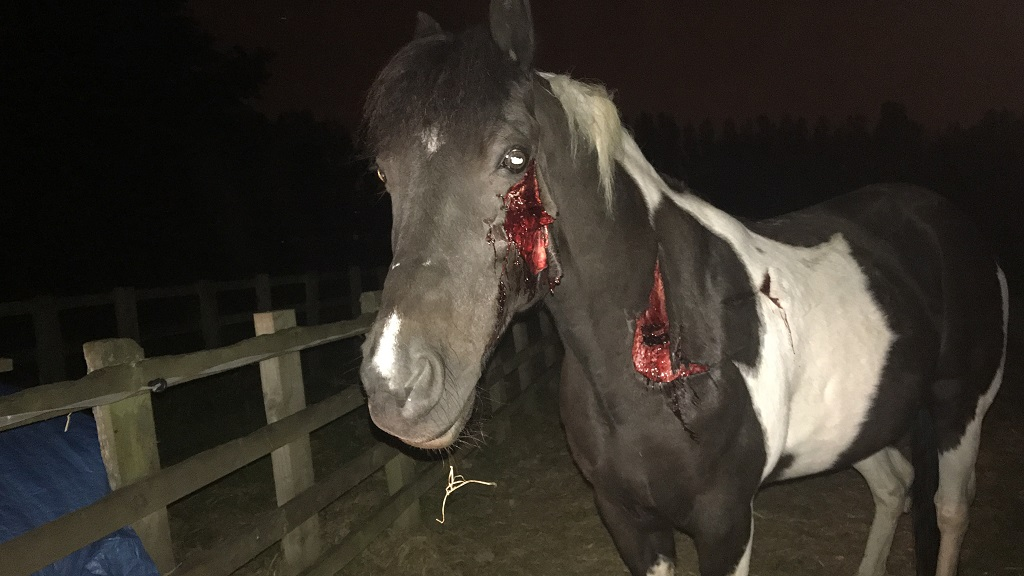 Horse seriously injured after brutal knife and hammer attack