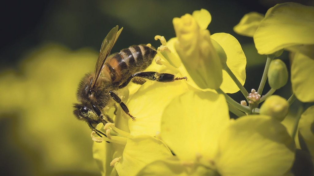 Defra Secretary says UK will support full ban on neonics