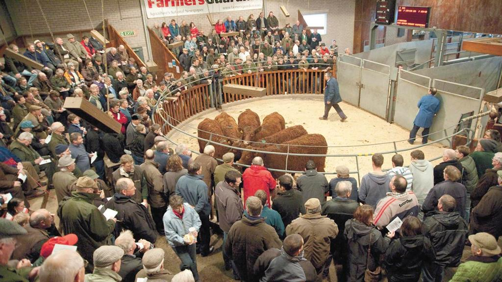 'Auctions more important than ever' - Strong mart trade highlights auctions' importance