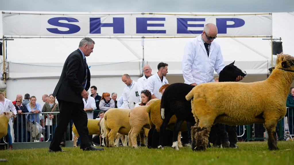 Blackface breeders boycott Balmoral Show over sheep housing row