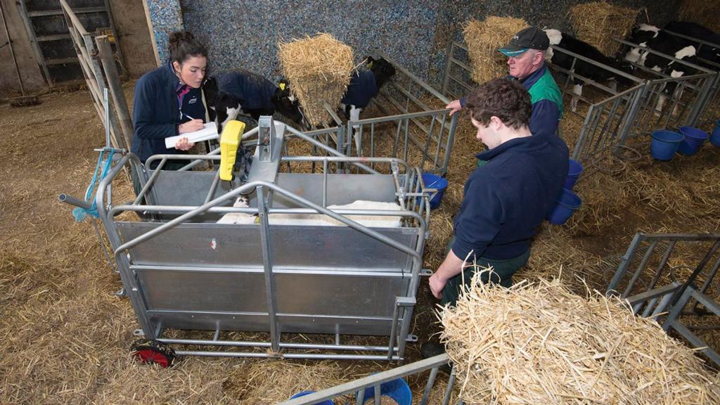 Year of the Family Farm: Nurturing the skills of individuals within a family farming business