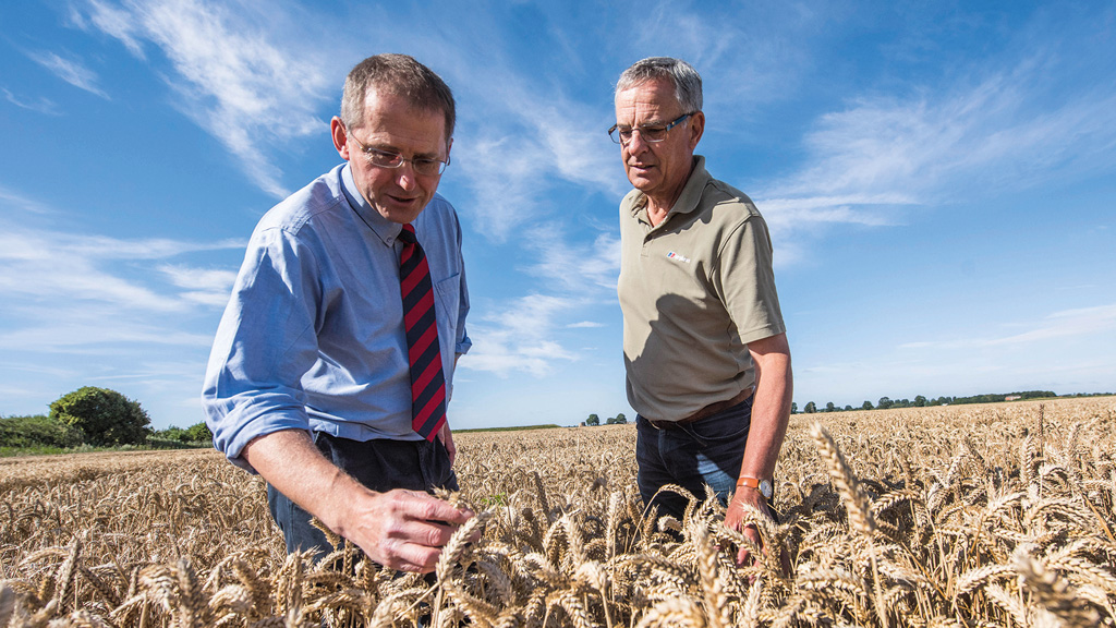 Elsoms Seeds: Winter Wheat, new varieties deliver on risk and reward