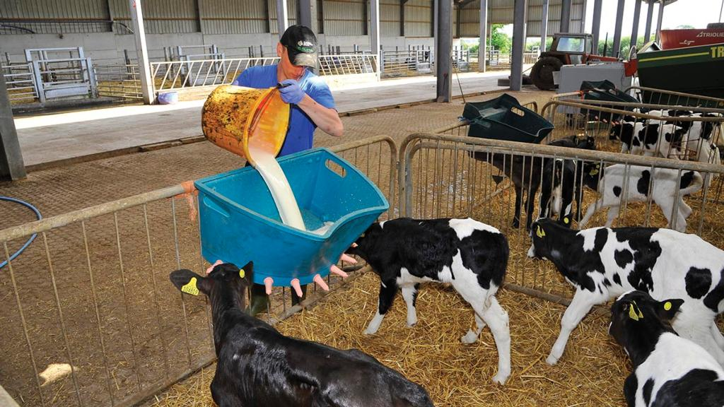 Rethinking dairy calf management